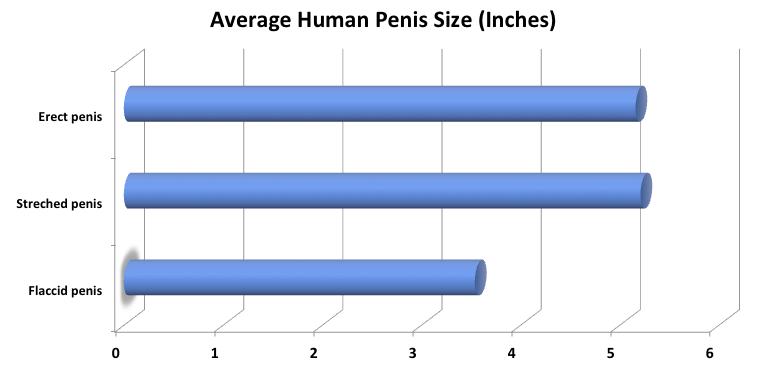 befolyásolja-e a növekedés a pénisz méretét