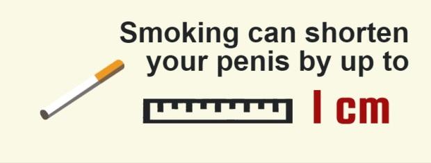 egészség a péniszről