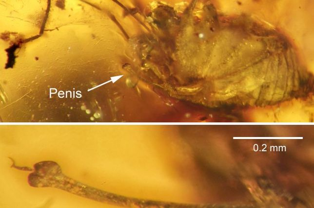 mutatja a pénisz)