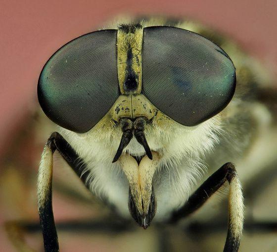 méh pollen az erekcióhoz nincs erekció a prosztata eltávolítása után, mit kell tenni