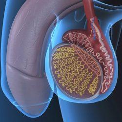 károsodott erekció a prosztatagyulladás miatt