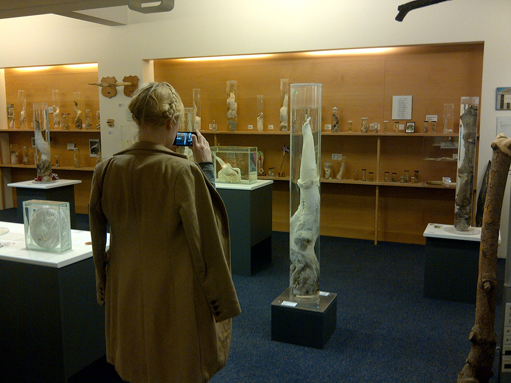 Az Izlandi Péniszmúzeum - FuraTermék Blog