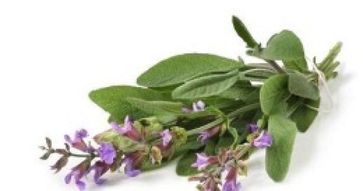 Növények, melyek növelik a libidót | Gyógyszer Nélkül