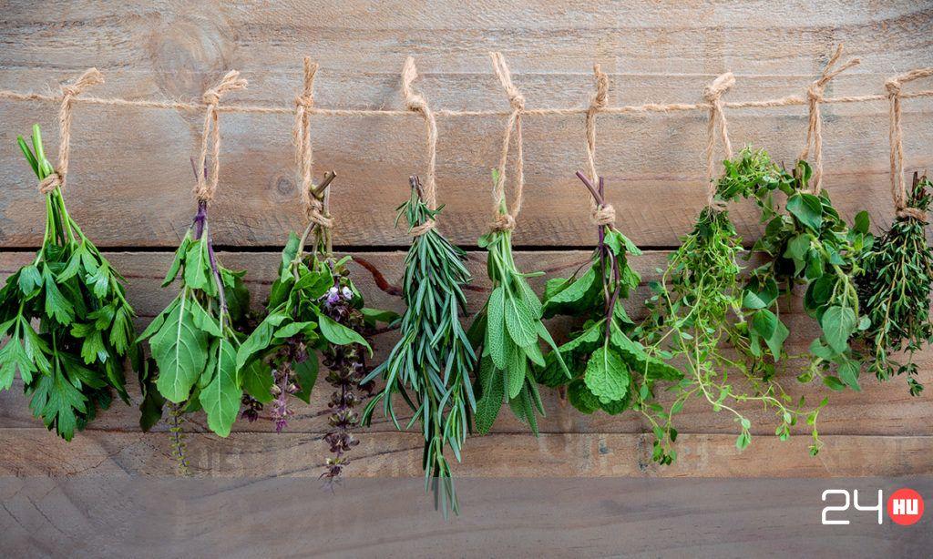 melyik növény merevedésre)