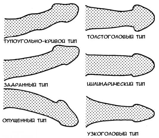 férfiak pénisz alakja)