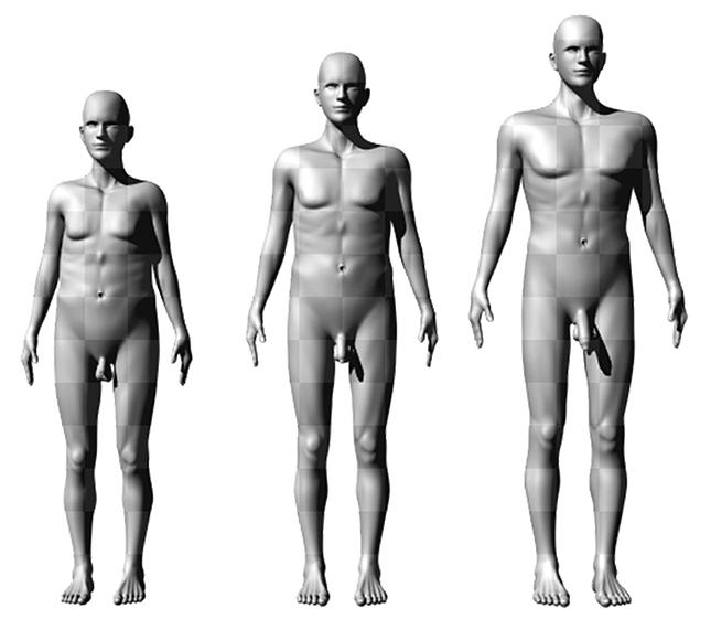 péniszméret és férfi magasság hogyan lehetne javítani az erekció népi módszereit