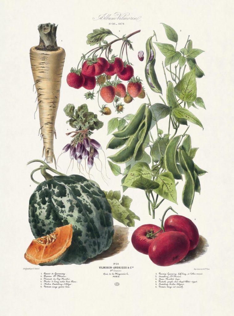 zöldségek és gyümölcsök felállítása)