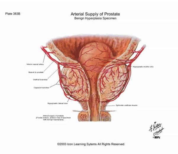 pénisz és szamár a nők számára amely a legjobb a merevedéshez