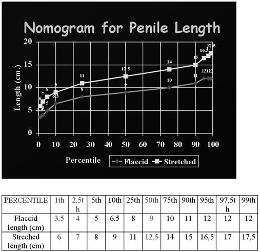 befolyásolja-e a pénisz mérete az erekciót