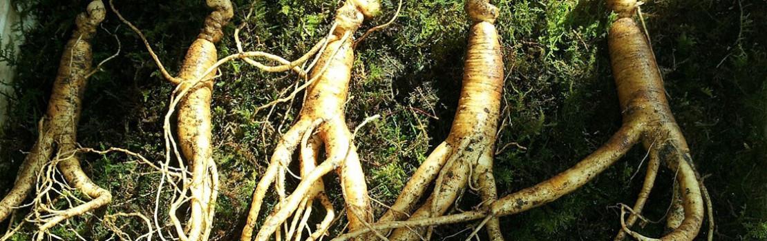 gyógynövények az erekció meghosszabbítására